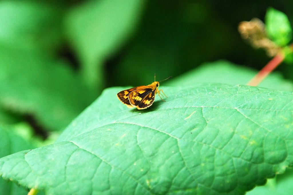 蝶ではないですが・・・Ⅱ