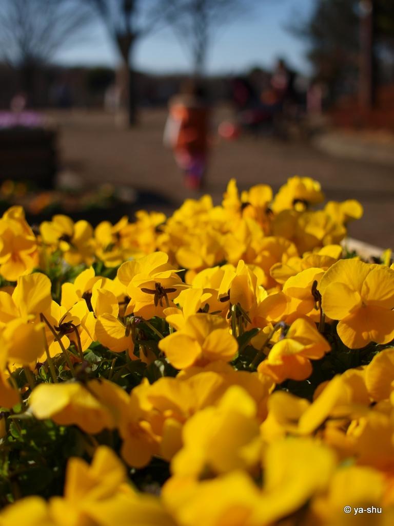 鮮やかな黄色