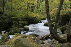 十和田湖 奥入瀬渓流の紅葉