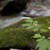 緑のコラボ