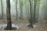 雨の八甲田