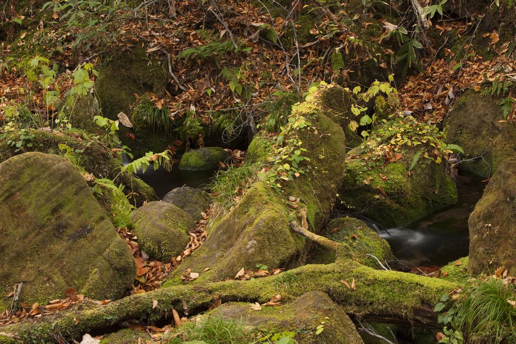 苔と枯れ葉