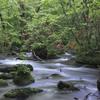 深緑の奥入瀬渓流