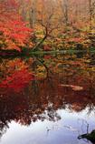 紅に染まる月沼