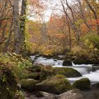 CANON Canon EOS 5D Mark IIで撮影した風景(秋の奥入瀬)の写真(画像)