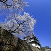 弘前桜祭り2