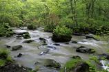 小雨の奥入瀬渓流Ⅱ