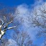 CANON Canon EOS 5D Mark IIで撮影した風景(青空)の写真(画像)
