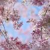青空の花道