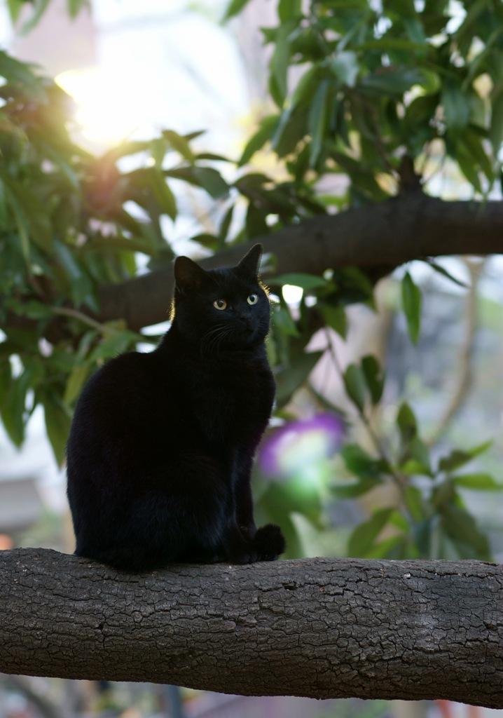木の上のネコ