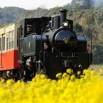 菜の花トロッコ列車