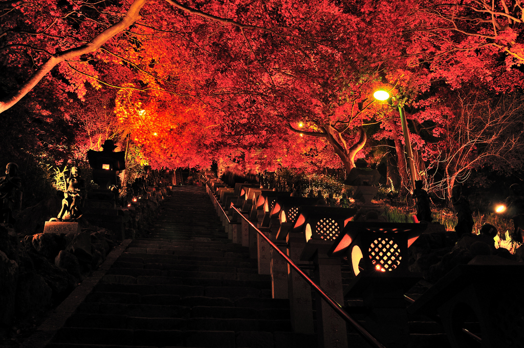 大山寺ライトアップ