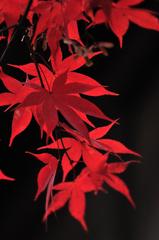 紅葉IMAGE3