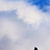 雲の彼方を目指して