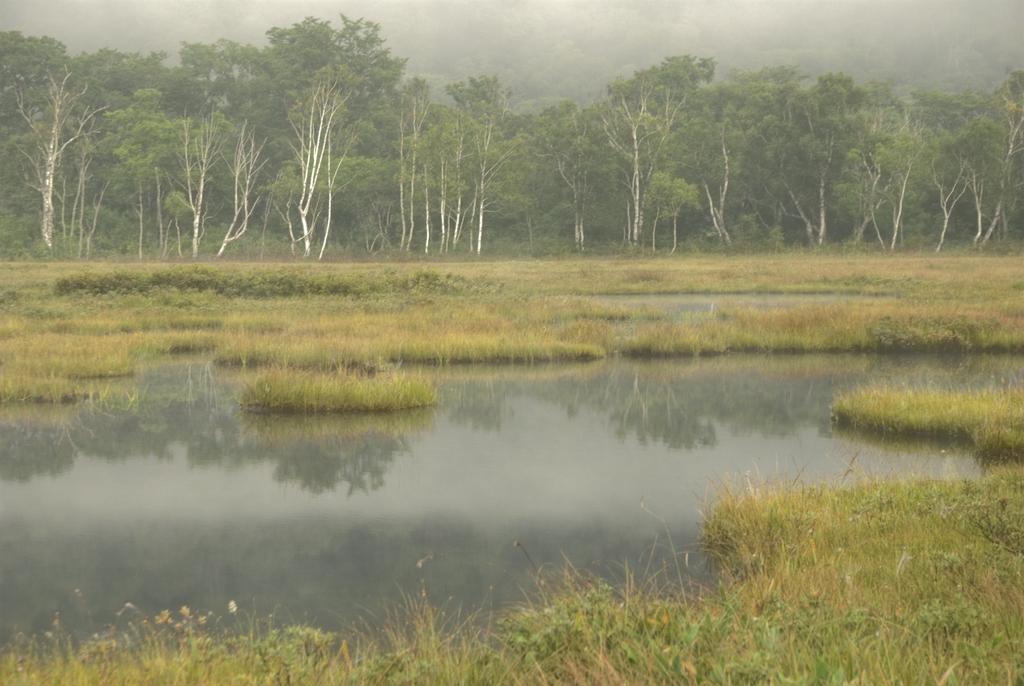 尾瀬の風景
