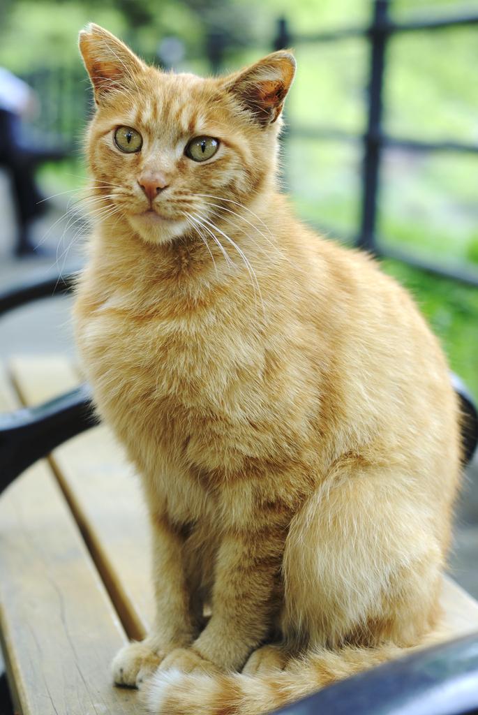 HIBIYA Cat