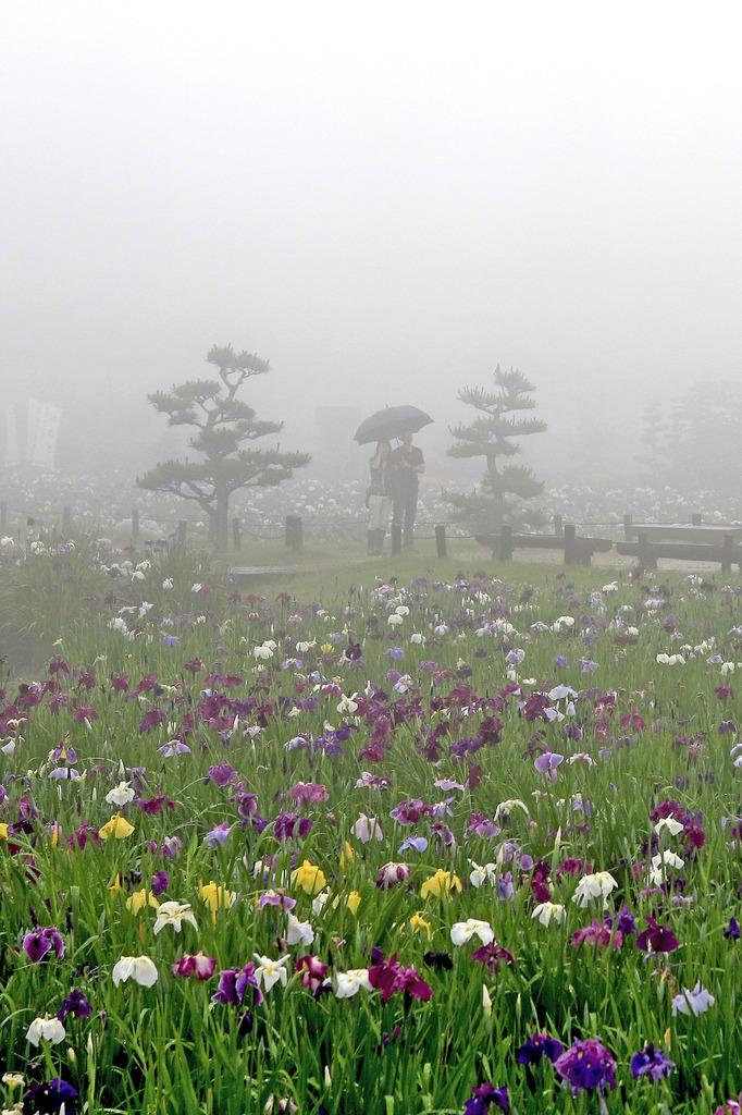 深い霧につつまれ