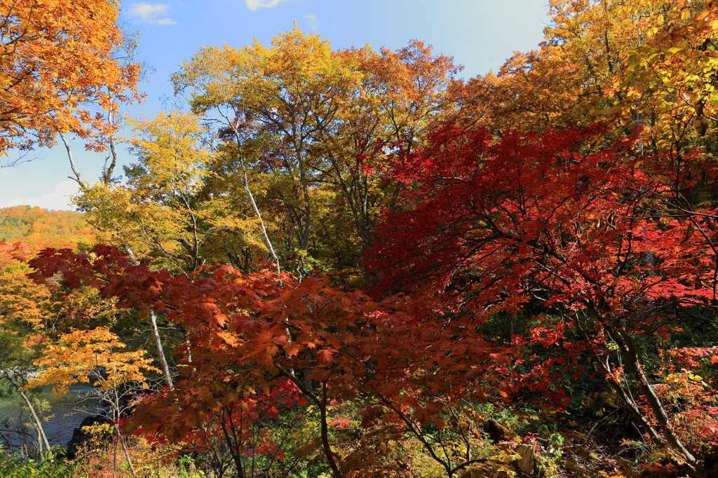 志賀高原 琵琶池遊歩道の紅葉