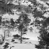 森閑雪景色