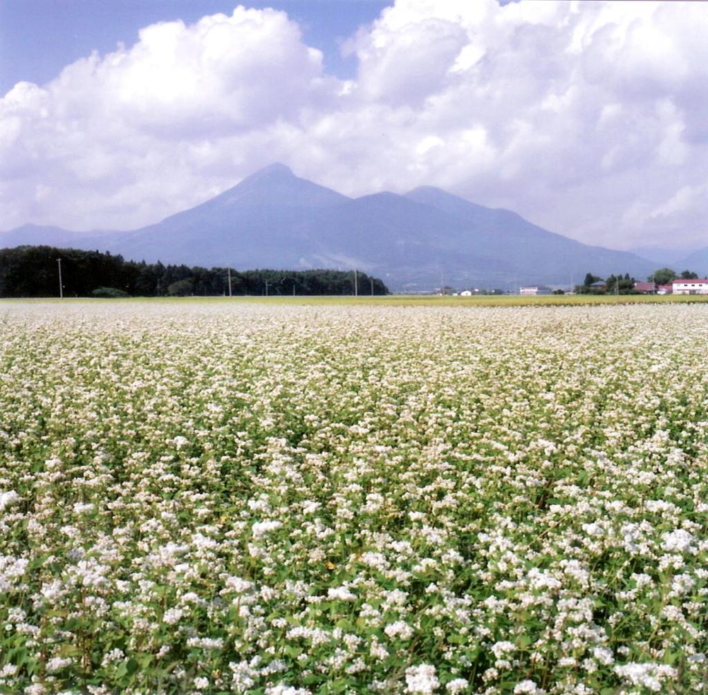 ソバの花と宝の山