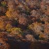 落葉のリズム