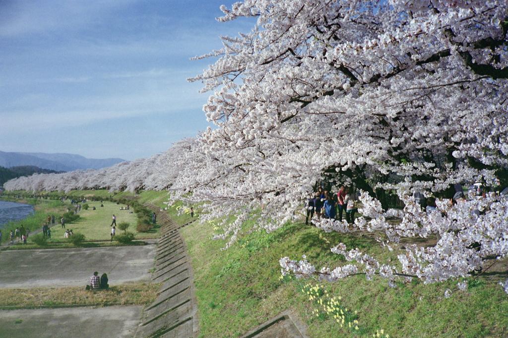 桧木内川春景