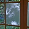 Window 2018 Fall ③