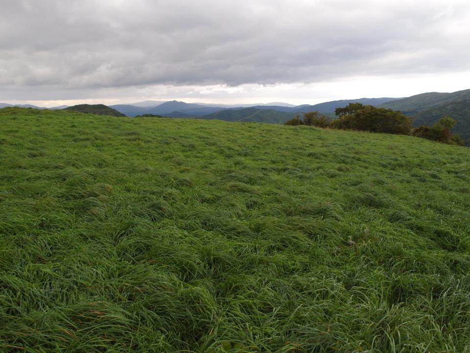 カルストの丘