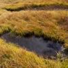 浄土平にて 湿原