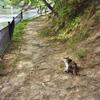 公園のネコ