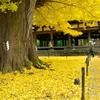 黄金の季節