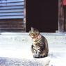 立石寺のネコ カット2