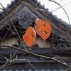 2012京都、秋①
