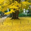 黄金の季節 その2