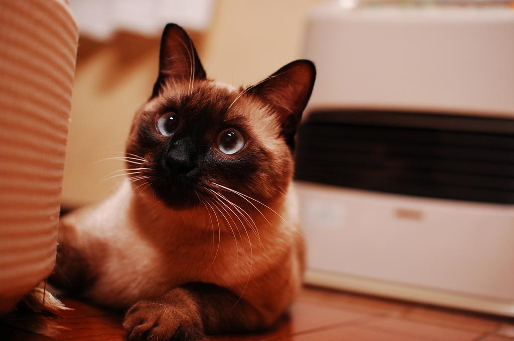 ストーブの番猫