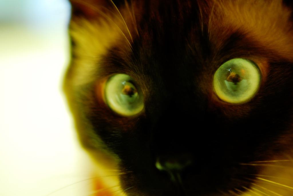 Eye Zooming...