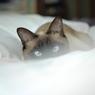 NIKON NIKON D200で撮影した動物(朝の表情)の写真(画像)