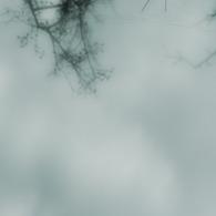 NIKON NIKON D200で撮影した動物(クモの棲処)の写真(画像)