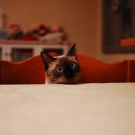 NIKON NIKON D40で撮影した動物(腹が減った)の写真(画像)