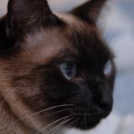 NIKON NIKON D200で撮影した動物(成長しました)の写真(画像)