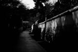 between lights and shadows