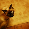 NIKON NIKON D200で撮影した動物(睨)の写真(画像)
