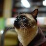 NIKON NIKON D40で撮影した動物(真剣な眼差し)の写真(画像)