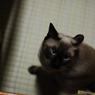 NIKON NIKON D40で撮影した動物(Eyes of demand)の写真(画像)