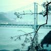 関門海峡の春