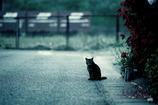 野良猫と僕のルール