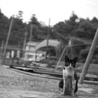 NIKON NIKON D40で撮影した動物(Commemoration taking a picture)の写真(画像)