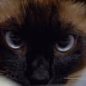 NIKON NIKON D200で撮影した動物(眼光)の写真(画像)