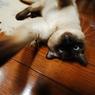 NIKON NIKON D40で撮影した動物(おりゃああぁあぁぁぁ)の写真(画像)
