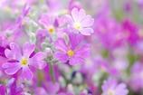 なんて花かわからんけどきれいだった
